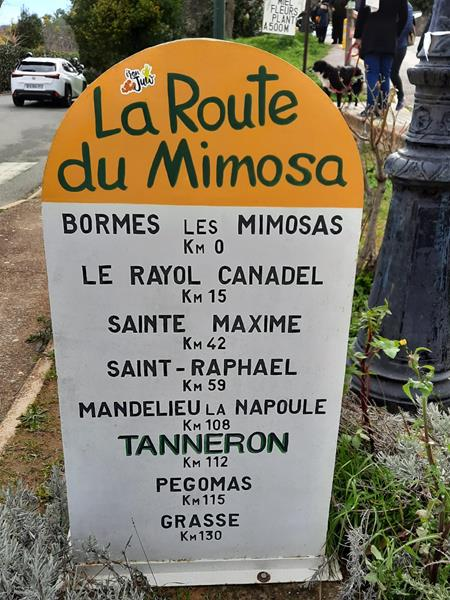 Costa Azzurra: la Route du Mimosa con tanto giallo, tanta natura e rispetto per l'ambiente (Video e Foto)