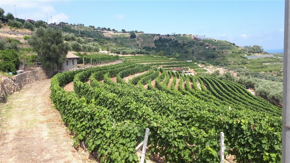 Vini liguri: per l'Azienda Agricola Lombardi la produzione inizia dall'amore per il vigneto e dalla sua storia