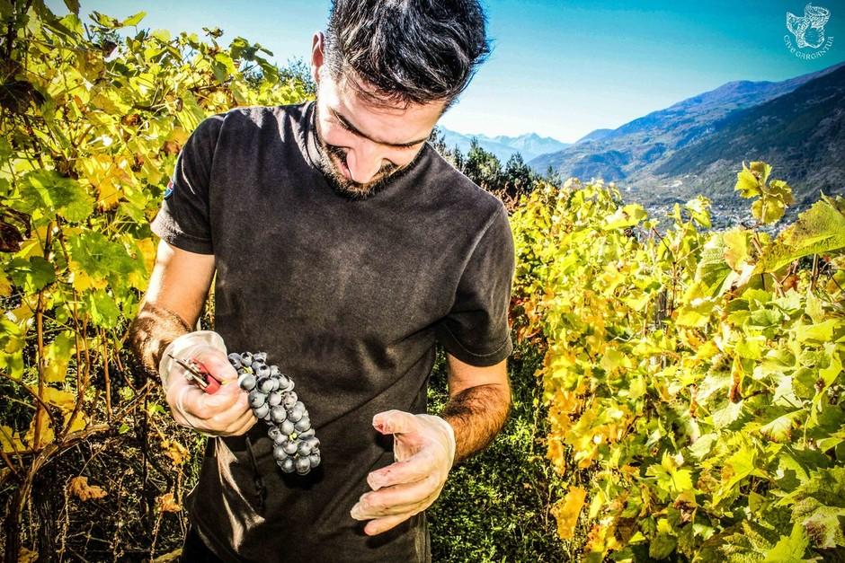 La Cave Gargantua: la tradizione vitivinicola della Valle d'Aosta, fatta di passione e amore per il buon vino