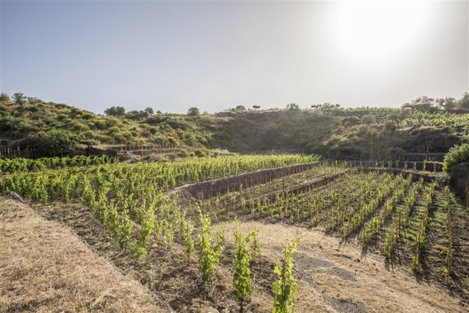 I vini della famiglia Moretti Cuseri dalla Toscana e dalla Sicilia in tutto il mondo