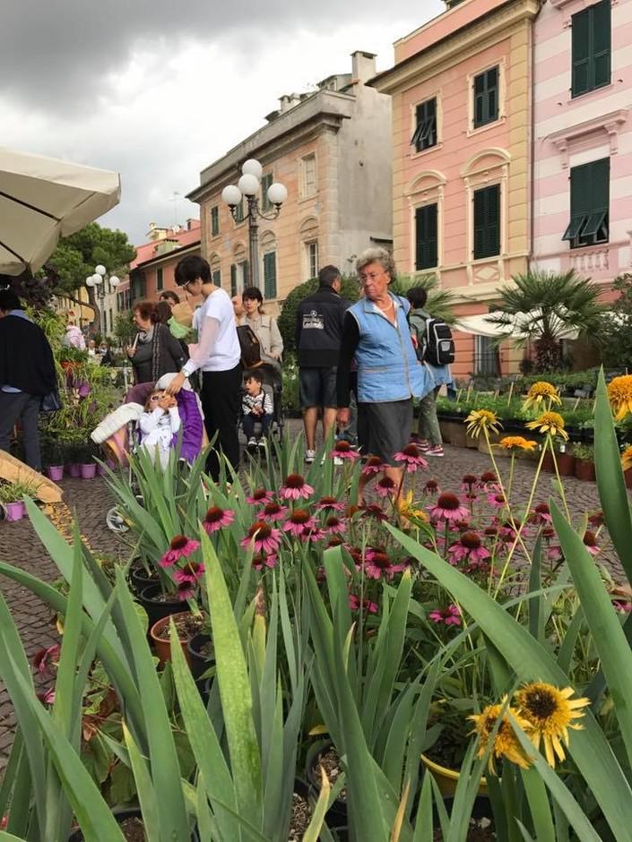 """Celle Ligure (SV): il prossimo week end torna """"FIORI FRUTTA QUALITÀ"""""""