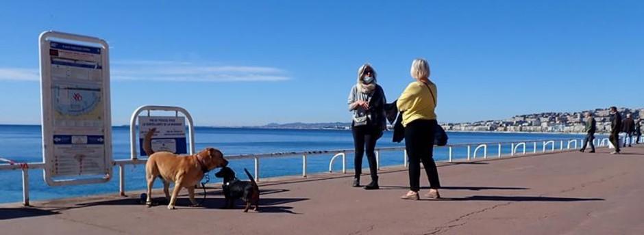 Nizza: la citta che ama i cani. Cosa offre al più fidato amico dell'uomo?