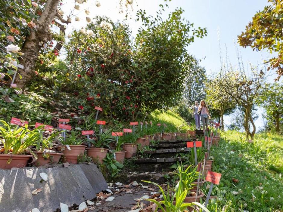 Canton Ticino (CH) alla scoperta del Parco botanico del Gambarogno