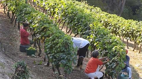 Costa Azzura: a Saint Paul de Vence anche il vino racconta la storia (Video e Foto)