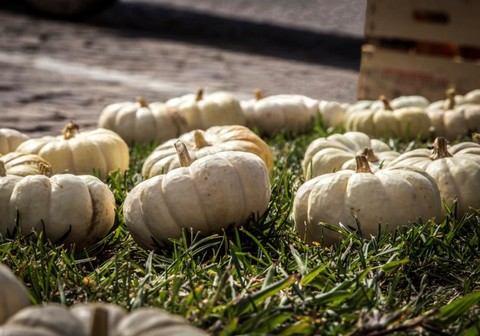 Piozzo (CN): Zucca in piazza il prossimo weekend con i produttori locali con di zucche e altri prodotti del territorio