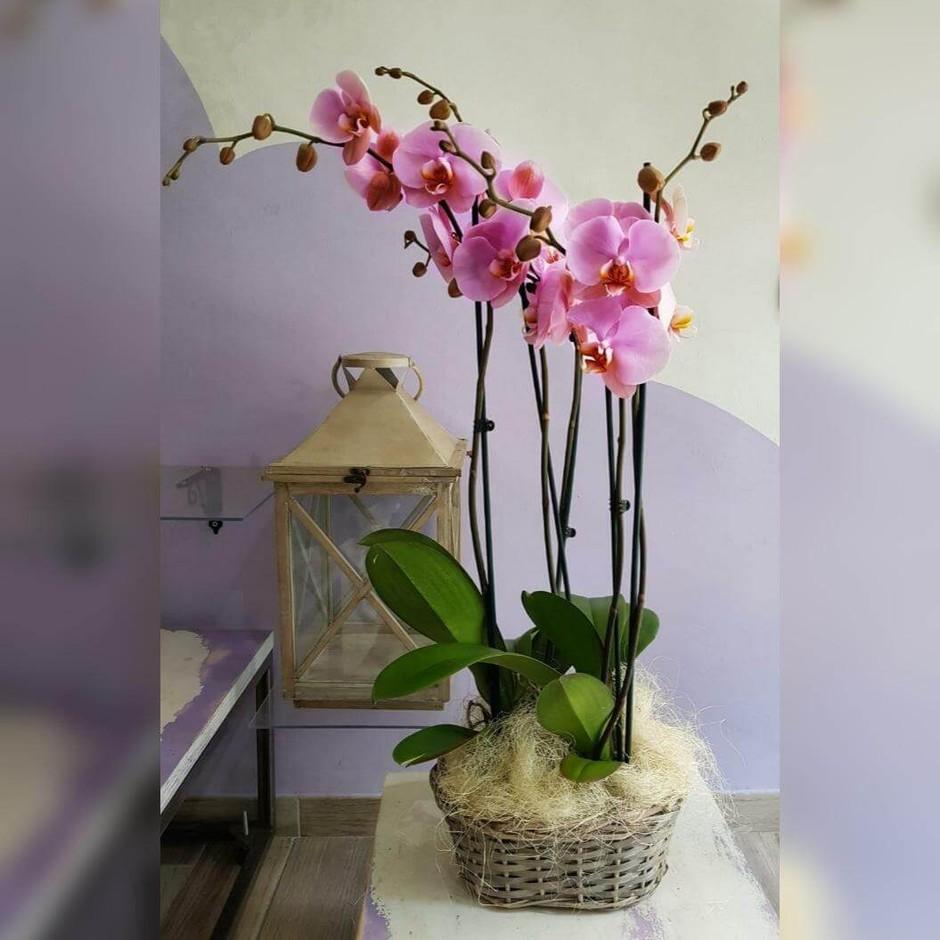 Coltivare le orchidee in casa in un video di Christophe Candet tutti i segreti