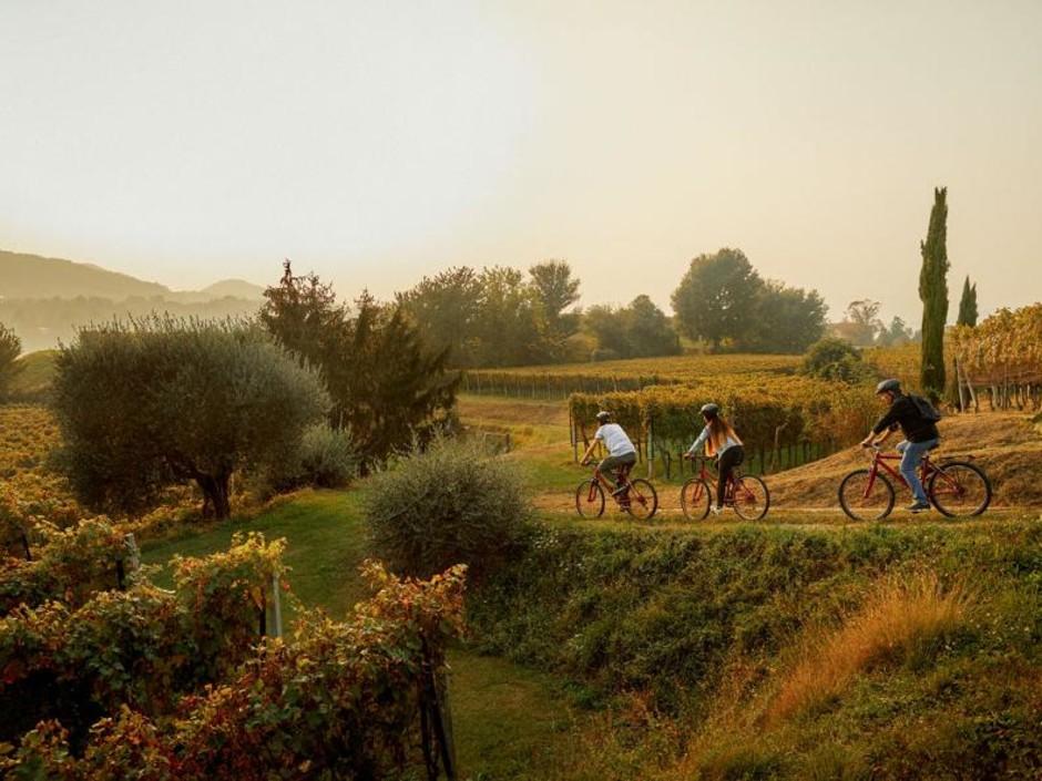Mendrisio (CH): escursioni in bicicletta alla scoperta del vino